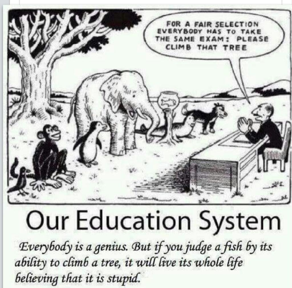 Why Most Education Systems are Ridiculous
